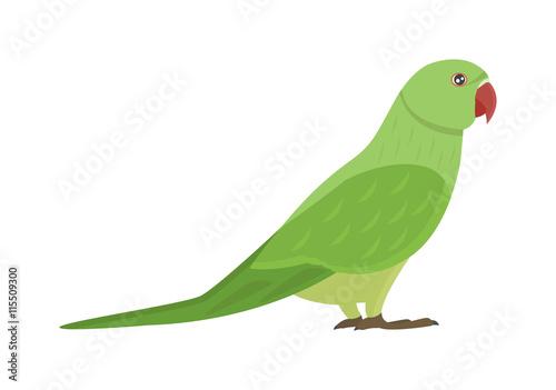 Cartoon parrots bird and parrot wild animal bird  Tropical parrot