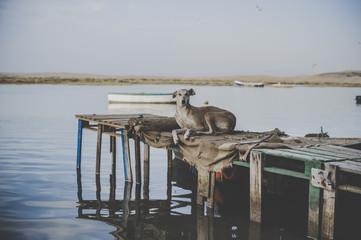 Dog in the Dock