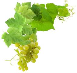 grappe de raisin blanc et vigne, fond blanc