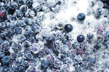 Juicy mature berries of bilberry in sugar close up. Berry bilberry background