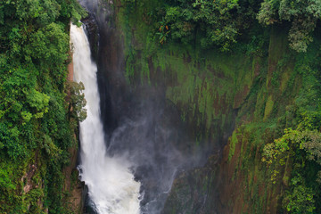 Big waterfall in rainforest