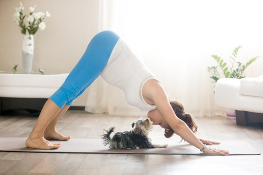 Healthy lifestyle concept. Pregnancy Yoga and Fitness. Young pregnant yoga woman kissing cute small dog while working out in living room. Pregnant model doing prenatal downward-facing dog at home