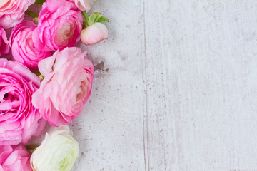 Pink and white ranunculus flowers on aged white wooden background