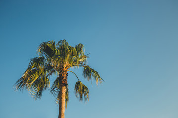 palm tree on blue sky with vintage effect