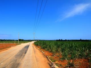 南大東島 さとうきび畑