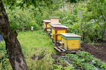Beehives at a small private apiary garden. Experimental apiary with different colorfull hives