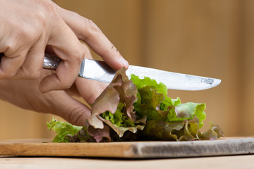 hands cutting green lettuce