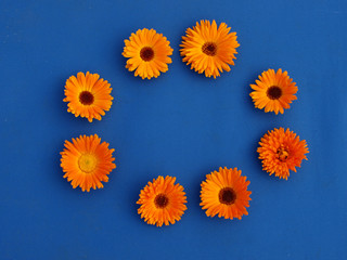 marigold flowers on blue material background