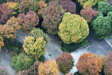 Fall foliage begins in Tokyo, Japan.