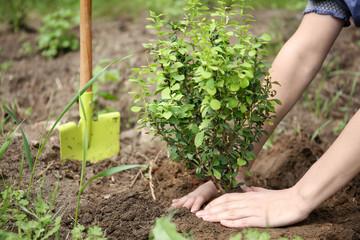 Woman planting bush