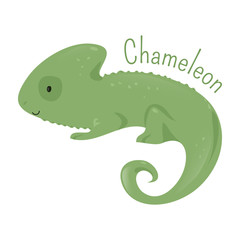 Chameleon isolated. Child fun pattern icon.