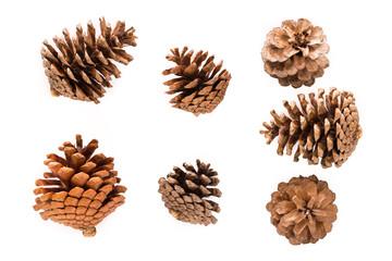 Dry pine cones
