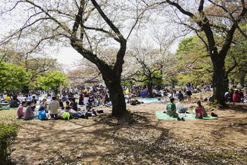 Japan, Tokyo, People relaxing in Yoyogi park