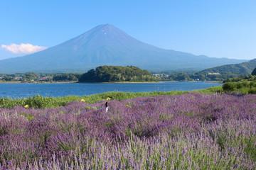 河口湖大石公園と富士山
