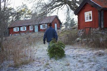 Sweden, Stockholm Archipelago, Sodermanland, Mefjard, Man walking and carrying tree