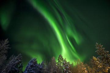 Finland, Lapland, Kittila, Levi, Aurora borealis over trees