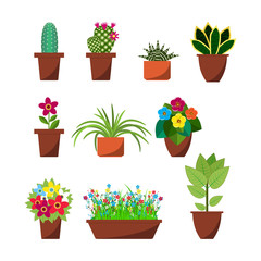 House plants and flowers for interior decoration
