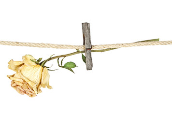 Old wooden clothespin on rope with faded rose on a white backgro