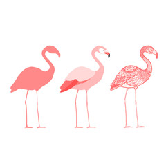 Three flamingos, isolated vector illustration