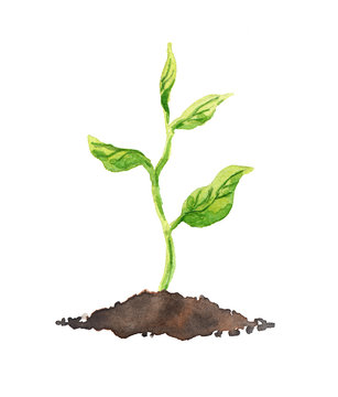 Green plant with leaves growing in soil. Watercolor