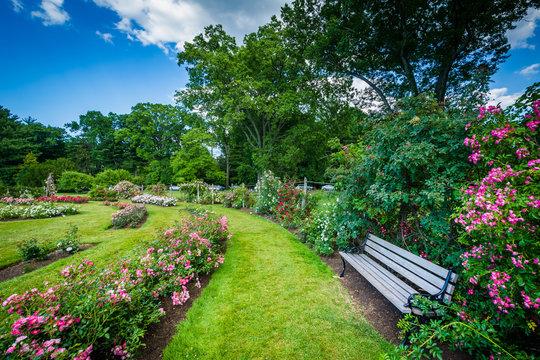 Rose gardens at Elizabeth Park, in Hartford, Connecticut.