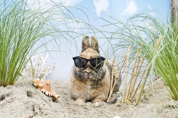 Kaninchen mit Sonnenbrille in den Dünen