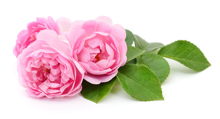 Three Pink Roses.