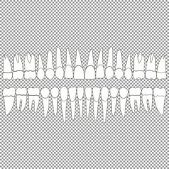 Set of teeth