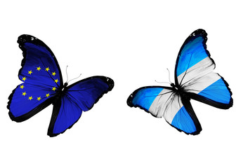 Concept - two butterflies with EU and Argentina flags flying