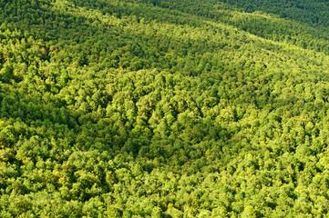 Foresta, bosco
