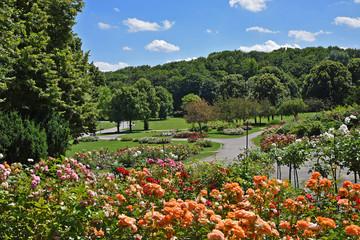 Fototapete - Rosenblüte im Westpark München