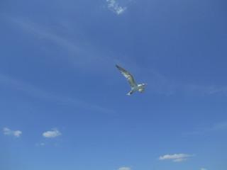 Чайка в небе