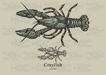 Crayfish. Vector illustration for web, education examples, graphic and packaging design. Suitable for patterns and artwork in