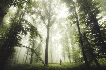 green woods with man walking Wall mural