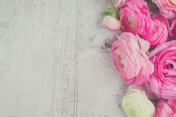 Pink and white ranunculus flowers on aged white wooden background, retro toned
