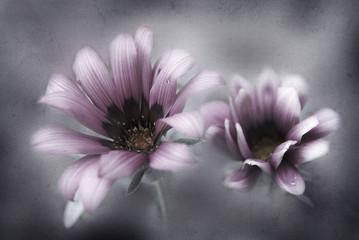 rosafarbene blüte mit textur