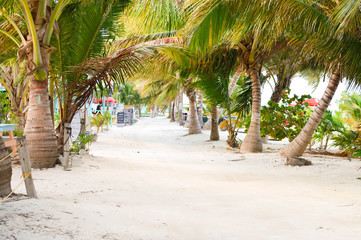 The white sand alley shaded by the palm trees by the Caribbean beach at Caye Caulker island, Belize