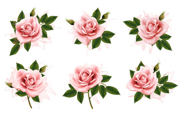 Wall Mural - Beautiful set of pink ornate roses with leaves. Vector.