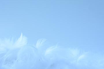白色の羽根 水色背景