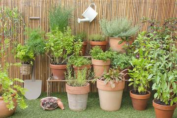 Gartenkräuter in Töpfen mit Dekoration