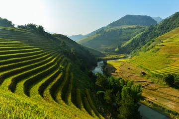 Garden Poster Rice fields Rice terrace on during sunrise,northeast region of Vietnam