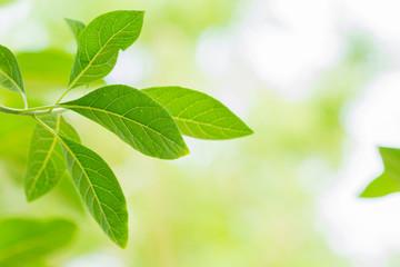 Leaf green background