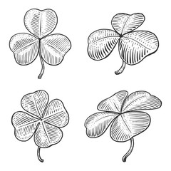 Clover leaf engraving style vector illustration