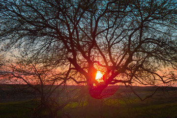 trees against beautiful sunset