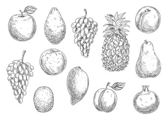 Sketch of vegetarian fruits in retro style
