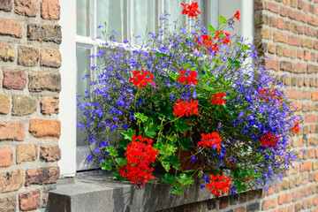 Red and blue flowering plants in a flower box