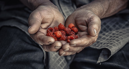 Raspberry in palm old senior man