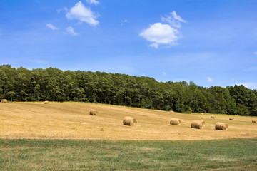 Round Hay Bales in a Field Against a Forest and Blue Sky.