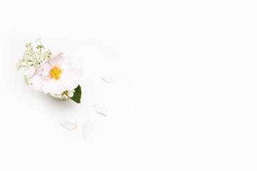 Flower on white background. Flat lay. Mock-up desk. Beauty