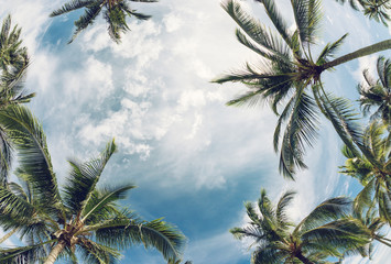 Palm tree tops against sky